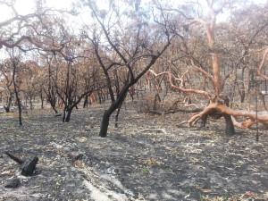 After the bushfire Dec 2013