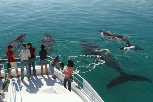 Whale watching Tour Hervey Bay