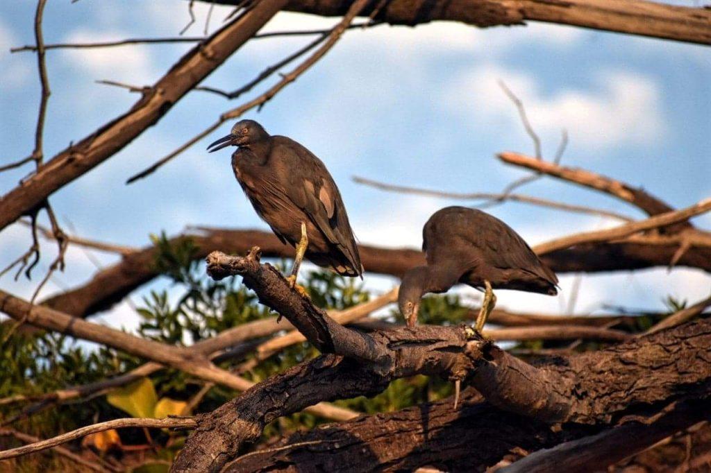 Birdlife Fraser Island