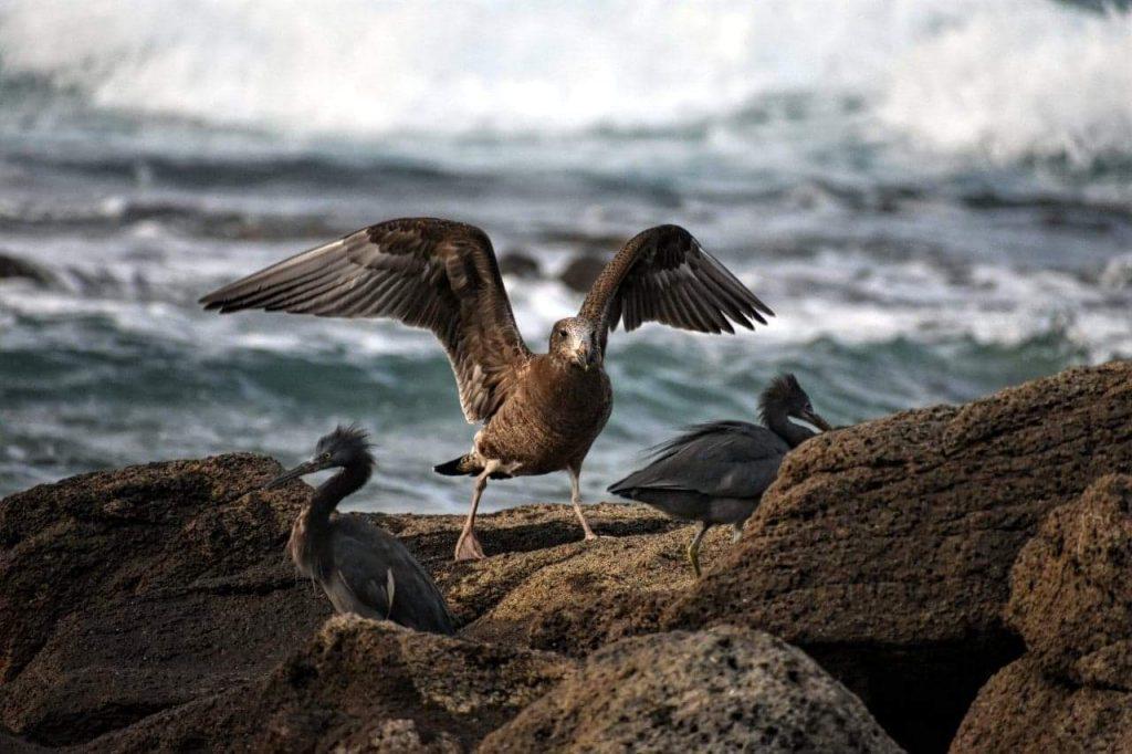 Migratory sea birds