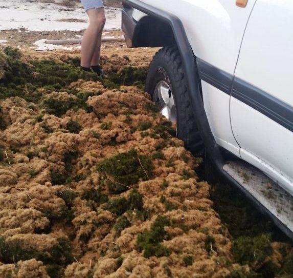 Getn Stuck in seaweed