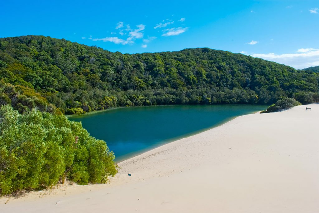 Lake Wabby is where a sand blow meets a perched lake. This spectacular lake is a must visit.