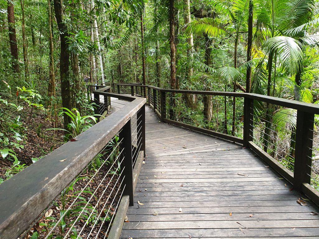 central station rainforest board walk